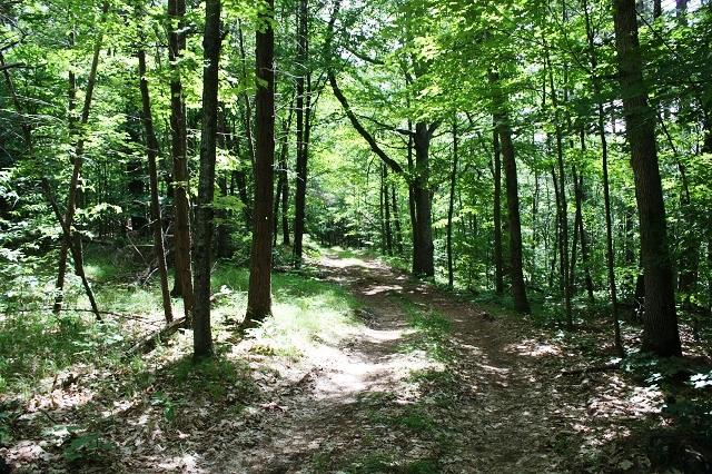 481 Bobs Lake Road Vacant Land Gurreathomes