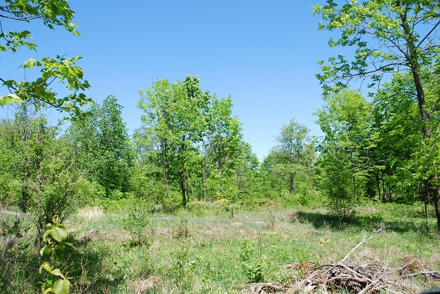 Murphy Road Lot 1 Acreage Westport Rideau Lakes Gurreathomes