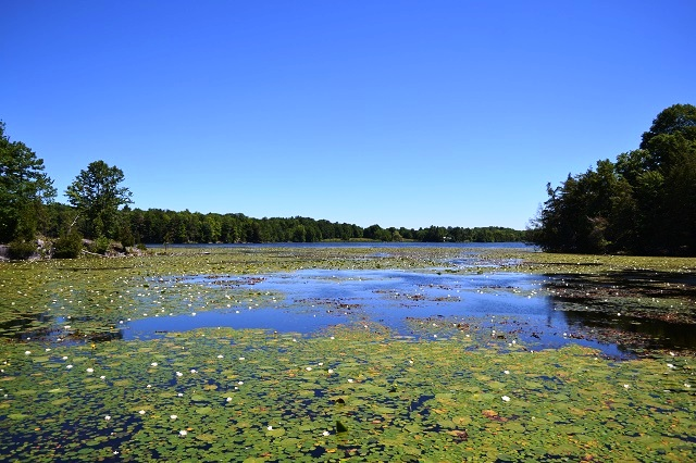 402 Massassauga Road Mosquito Lake Vacant Land Waterfront Acreage Gurreathomes